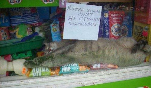 Коты тоже ходят по магазинам