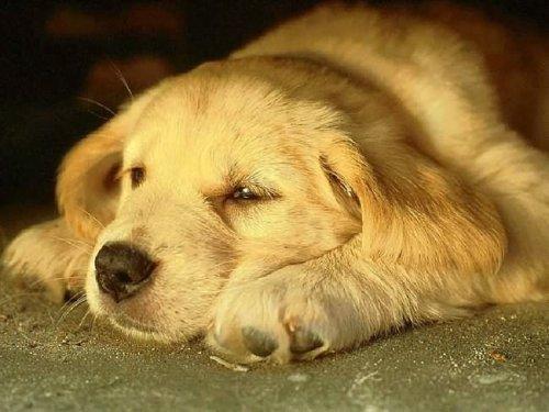 Один год жизни собаки равен 7 годам жизни человека