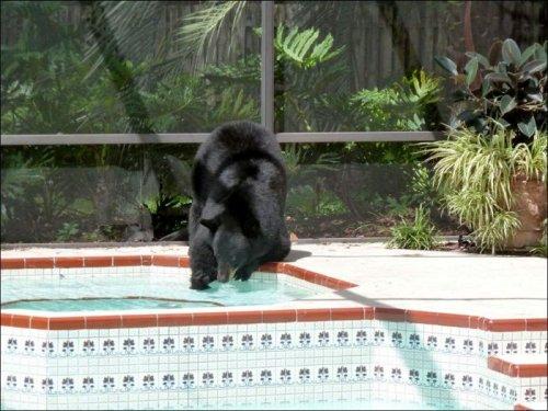 Медведь зашел в гости