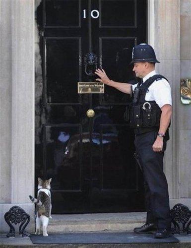 Кот премьер-министра Великобритании
