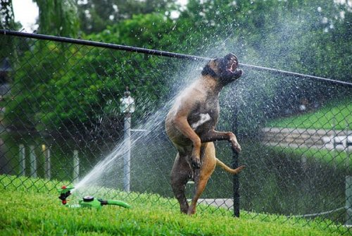Собаки и поливалки