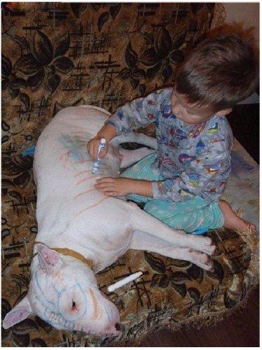 Почему собаки кусают людей?