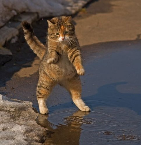 Балдеющий котяра
