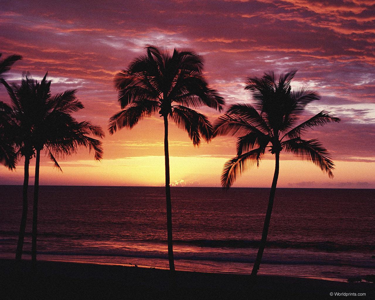 Открытки весь, картинки с днем рождения пальмы