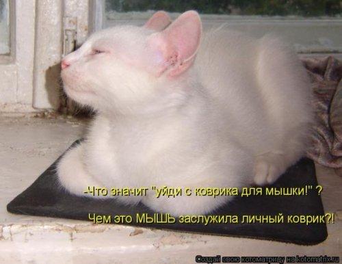 Главная котоматрица за неделю
