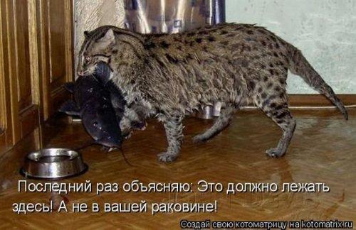 Смешные картинки с надписями и про животных за 18.08.2011.
