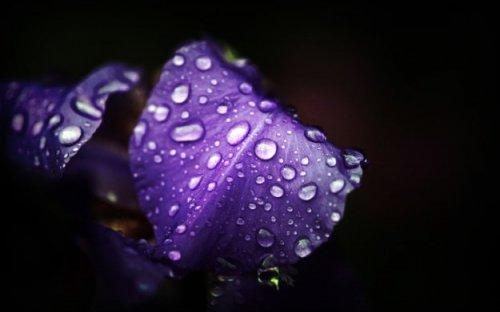 Насекомые и растения после дождя