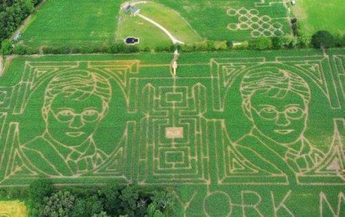 Гарри Поттер на кукурузном поле