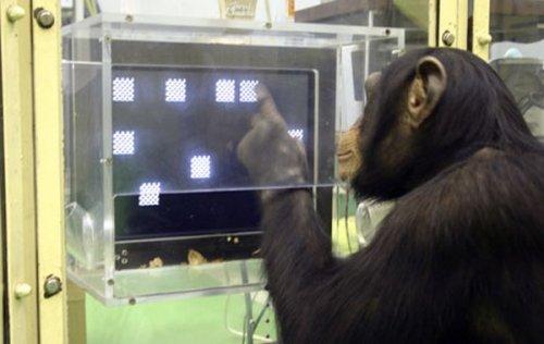 10 самых умных животных в мире