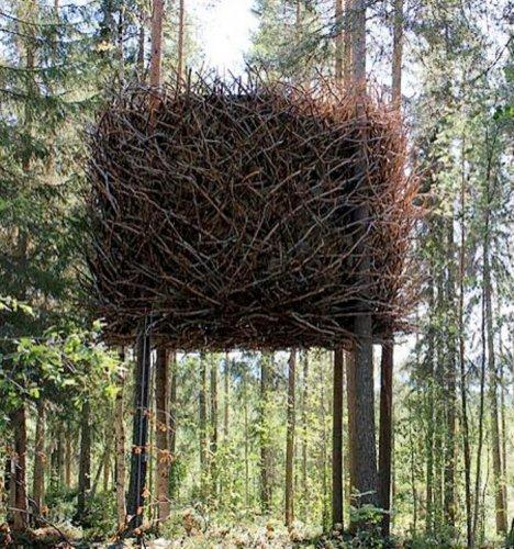 Концептуальный  дом-гнездо