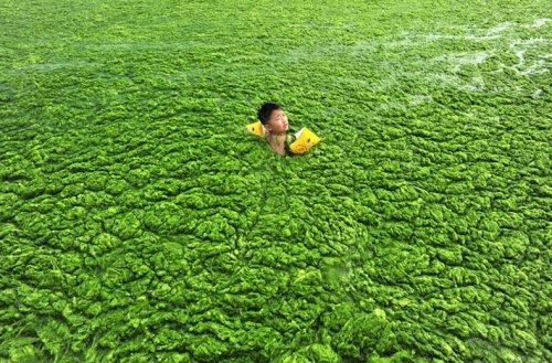 Зеленые китайские пляжи