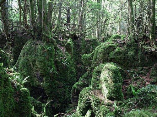 Паззлвуд - место где обитают эльфы