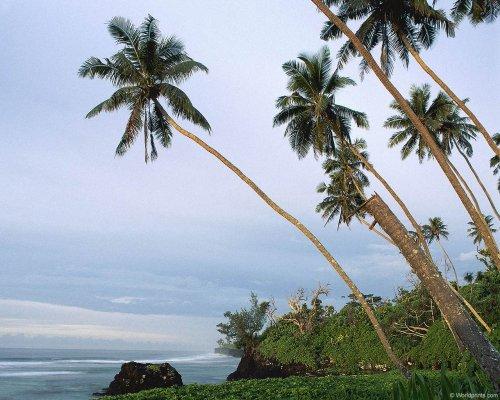 Тропические обои для рабочего стола