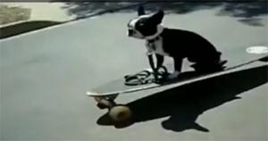 Собаки-неудачники (2011)