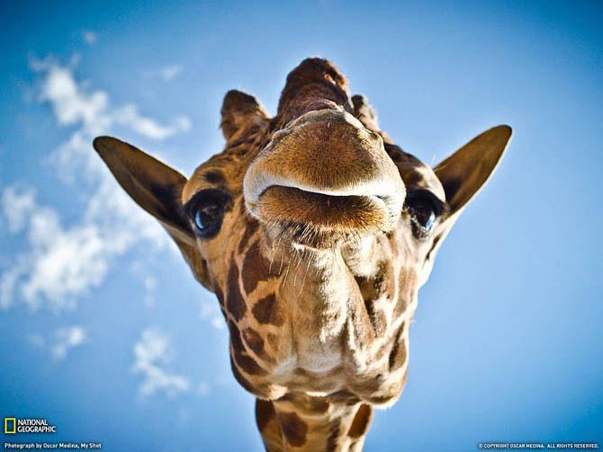 Очень красивые фотографии животных от National Geographic - Красота