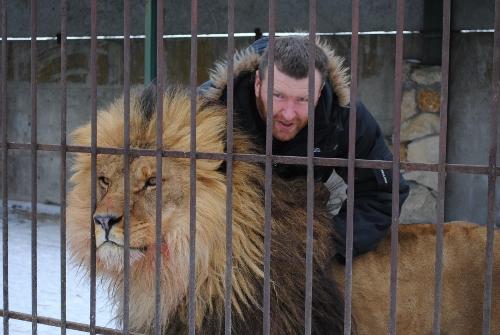 35 дней в одной клетке со львами