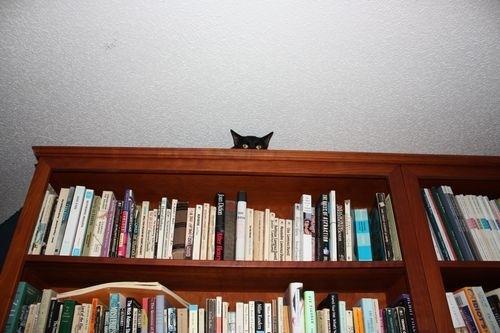 Найди котэ