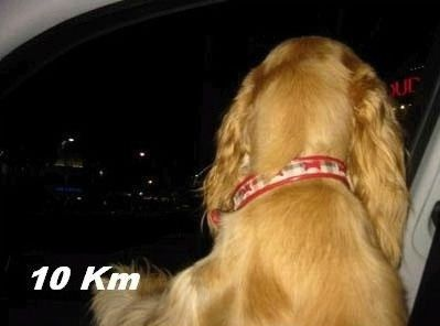 Собака - на машине катака