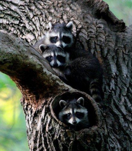 Тройняшки (20 фото)