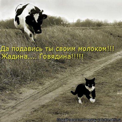 Веселая котоматрица свежак!