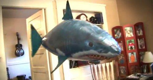 Летающие рыбы у вас дома