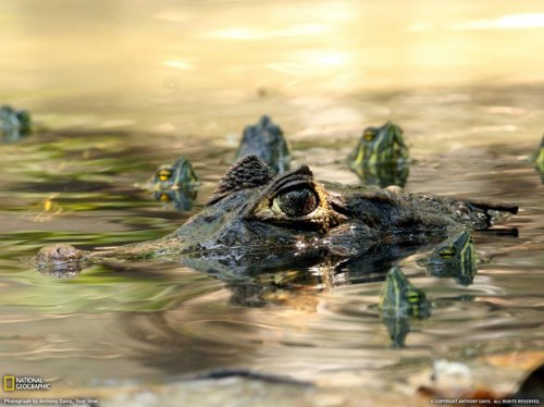 �������� �������� �� National Geographic