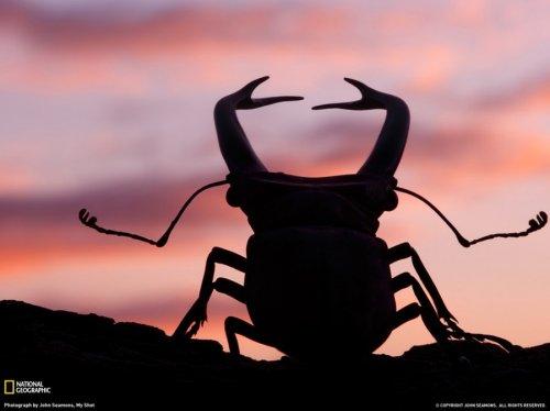 Красивые животные от National Geographic
