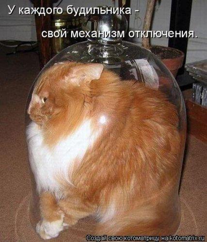 Главная котоматрица свежак