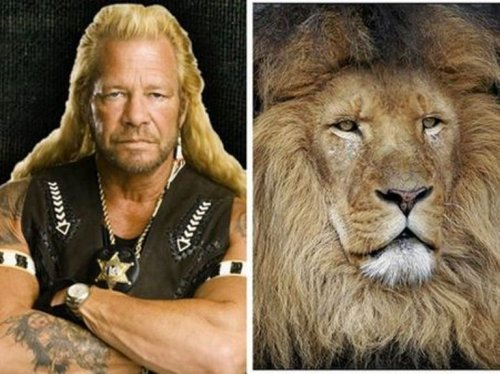 Животные похожие на знаменитостей