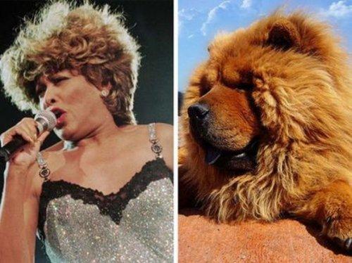 Животные, похожие на знаменитостей