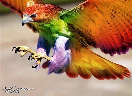 Мир в ярких красках