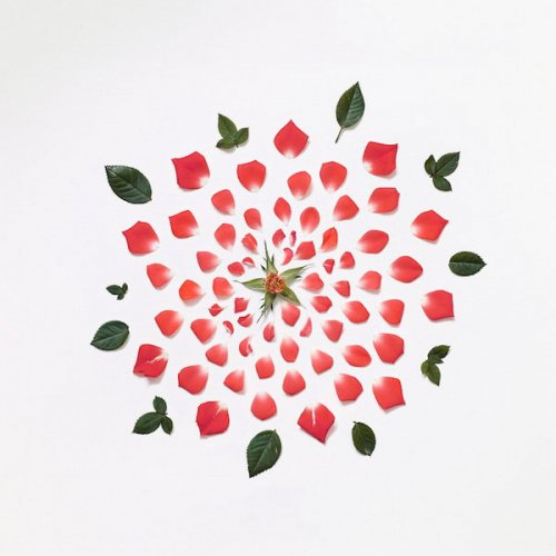 Цветы в разобранном виде