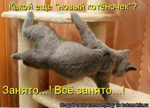 Еженедельные котоматрицы