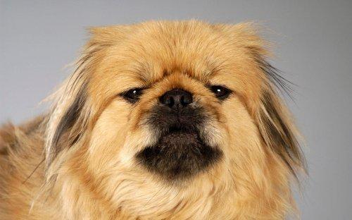 Забавные портреты собак