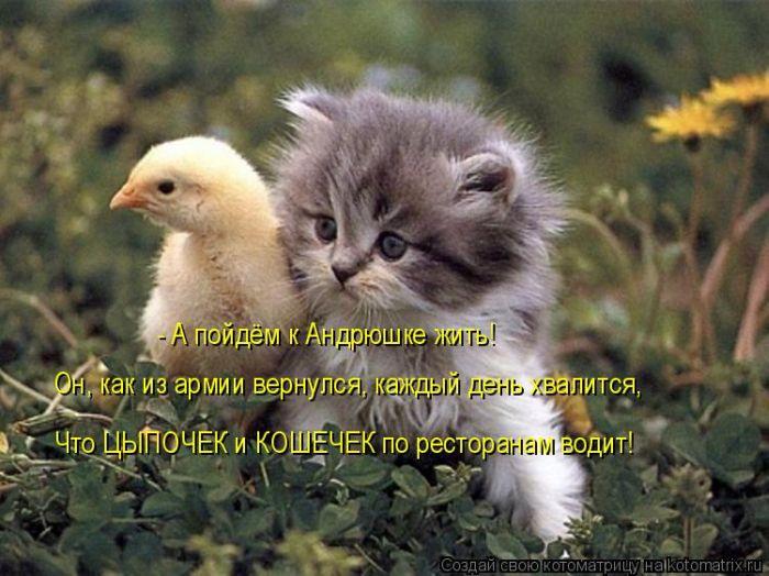 http://www.bugaga.ru/uploads/posts/2011-09/1317371460_koshki-1.jpg