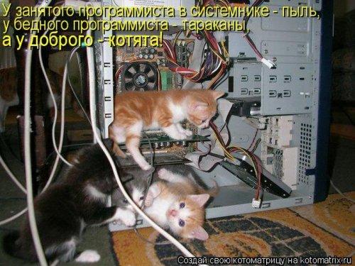 Свежие котоматрицы, смешно