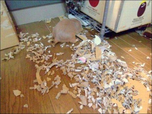 Животные - разрушители