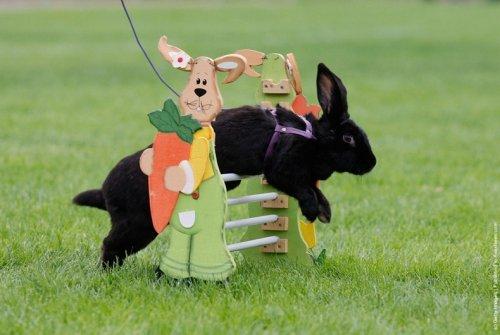 Соревнования Кроликов в Германии