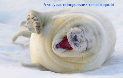Большая коллекция фото приколов