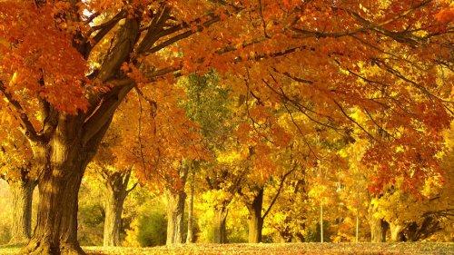 Вот и осень пришла!
