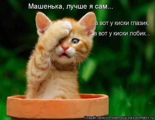 Милая котоматрица