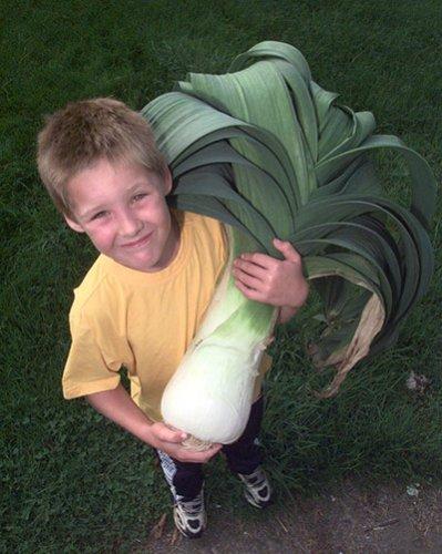 Выставка гигантских овощей