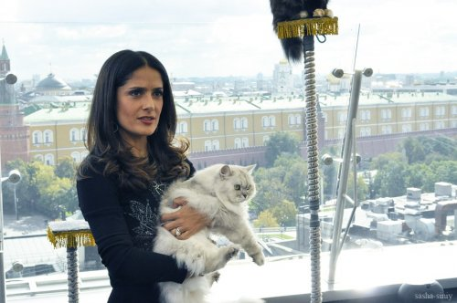 "Антонио Бандерас и Сальма Хайк на презентации ""Кота в сапогах"""