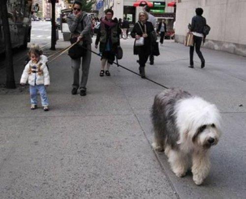 Как не следует выгуливать собак