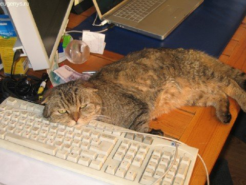 Коты и клавиатура