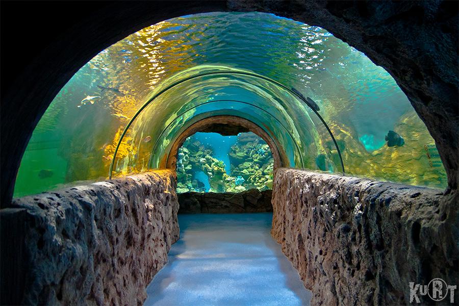 Фото московского океанариума