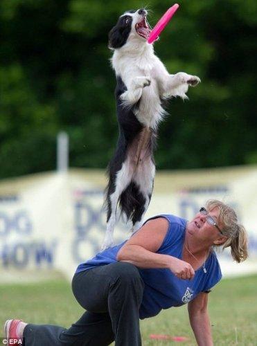 Чемпионат Европы среди собак по фрисби 2011