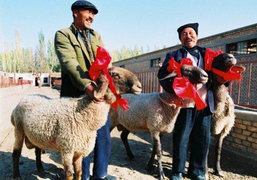 Самая дорогая овца в мире