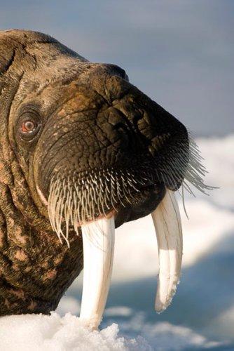 Удивительные арктические фотографии от Луизы Мюррей