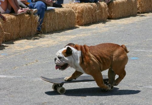 Животные-скейтбордисты
